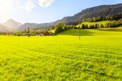 Green grass field in Austrian Alps Stock Photo