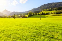 Green grass field in Austrian Alps.  Royalty Free Stock Images