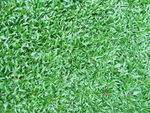 Green grass field backgroun, texture Stock Photo