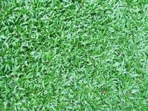 Green grass field backgroun, texture Stock Photo