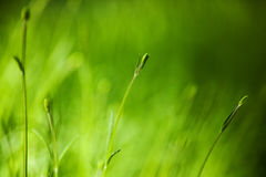 Green grass field background Stock Photos