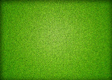 Green grass field background Stock Image