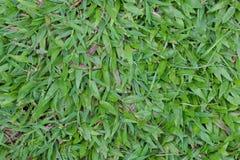 Green grass field. Stock Photo