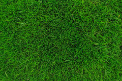 Green grass. On the green field for green background Stock Photos