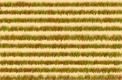 Green grass field background. Art design green grass field background Stock Image