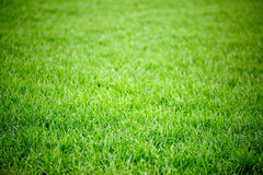 Green grass field background Stock Photography