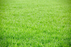 Green grass field background Royalty Free Stock Photos