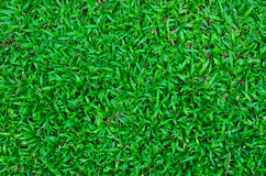 Green grass field background Stock Photo