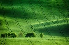 Green grass field background Stock Photos