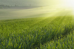 Green grass field background Stock Images