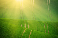 Green grass field background Royalty Free Stock Image