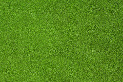 Green grass field Royalty Free Stock Photography