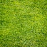 Green grass field background, texture, pattern Stock Photos