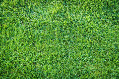 Green grass field background, texture, pattern Stock Photography