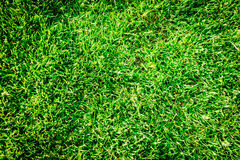 Natural new green grass texture new playground Stock Images