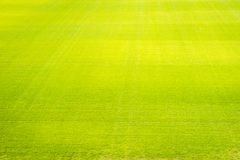 Natural new green grass texture new playground Royalty Free Stock Images
