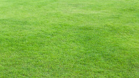 Green grass field background. Green grass field use for background Royalty Free Stock Images
