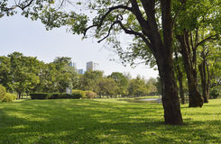 Green grass field in big city park Royalty Free Stock Image