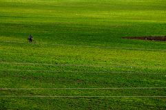 Green grass field with a biker royalty free stock photo