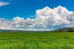 Green grass field blue cloudy sky horizon background stock photography
