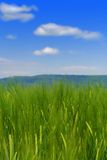Green Grass Field and blue sky Royalty Free Stock Photos
