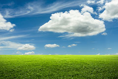 Green grass field and blue sky Stock Images