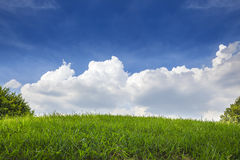 Green Grass field and Blue Sky with Clouds Stock Image