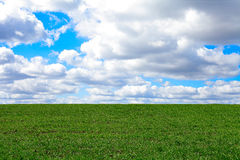 Green grass field. With blue sky and clouds Royalty Free Stock Photo