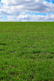 Green grass field. With blue sky and clouds Royalty Free Stock Photos