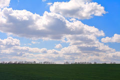 Green grass field. With blue sky and clouds Royalty Free Stock Image