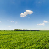 Green grass field and blue sky with clouds Stock Photos