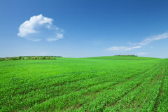 Green grass field and blue sky with clouds Royalty Free Stock Photo
