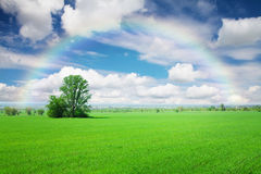 Green grass field, blue sky with clouds and rainbow Stock Images