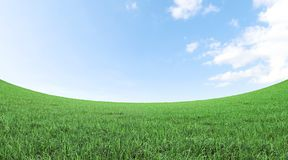 Green grass field and blue sky 3D rendering