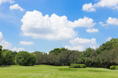 Green grass field and blue sky Royalty Free Stock Image