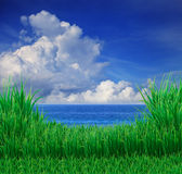Green grass field and blue sky white cloud Royalty Free Stock Image