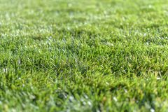Green grass field with blur park background royalty free stock photography