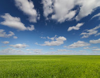 Green grass field and bright blue sky Royalty Free Stock Photos