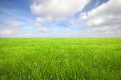 Green grass field Stock Photos