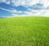 Green grass field and bright blue sky. Background royalty free stock photos
