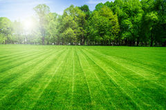 Green grass field and bright blue sky. Background Stock Images