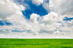Green grass field and bright blue sky background. Green grass field and bright blue sky Royalty Free Stock Images