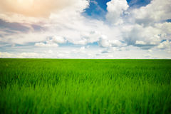 Green grass field and bright blue sky background Stock Images