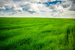 Green grass field and bright blue sky background. Green grass field and bright blue sky Royalty Free Stock Photography