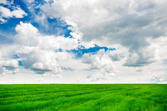 Green grass field and bright blue sky background. Green grass field and bright blue sky Stock Images