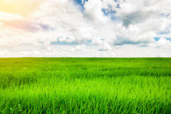 Green grass field and bright blue sky background. Green grass field and bright blue sky Stock Photos