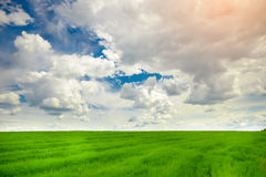 Green grass field and bright blue sky background. Green grass field and bright blue sky Royalty Free Stock Photo