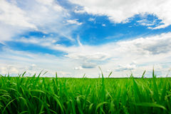 Green grass field and bright blue sky background. Green grass field and bright blue sky Stock Photo