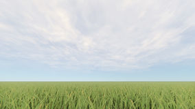 Green grass field and bright blue sky 3D rendering.  Stock Photography