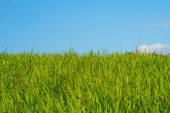 Green grass field and bright blue sky stock photos